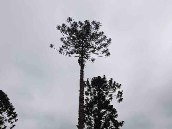tree_removal_company_service