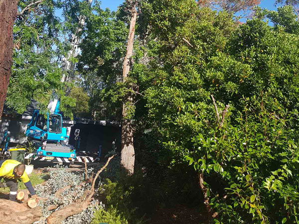 tree_removal_west_sydney