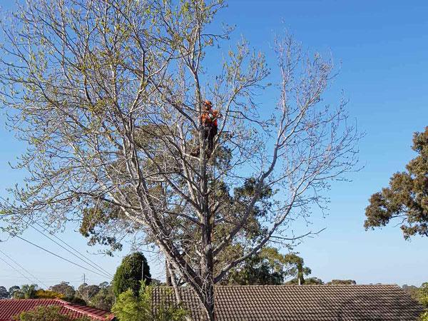 tree_service_cut_fallen