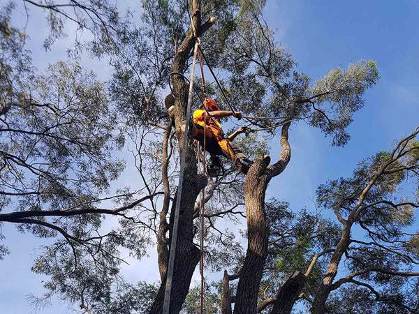 tree_shrub_lopping
